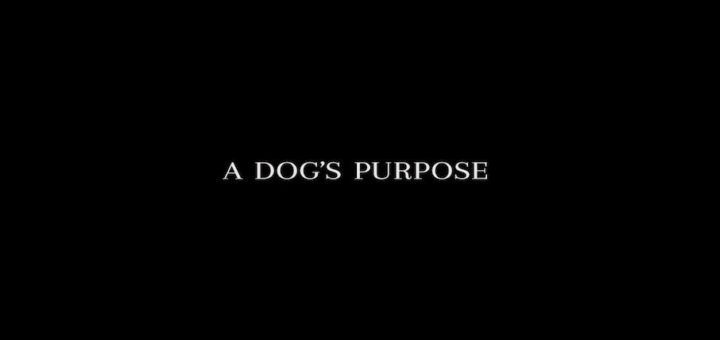 Dog's Purpose Featured